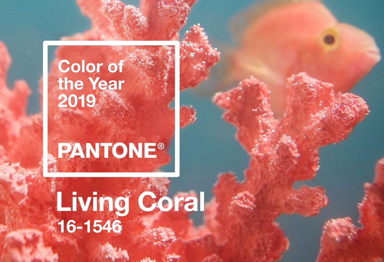pantone color of the year  living coral banner mobile